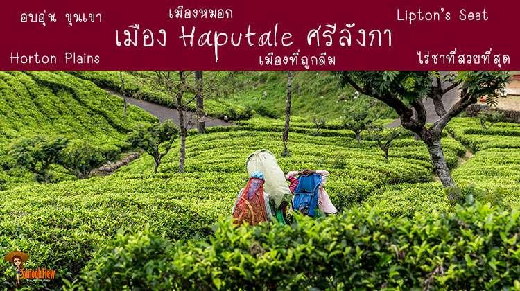 เที่ยว Haputale ศรีลังกา ขุนเขา ไร่ชา และ(ความลึกลับของ)ป่าหมอก
